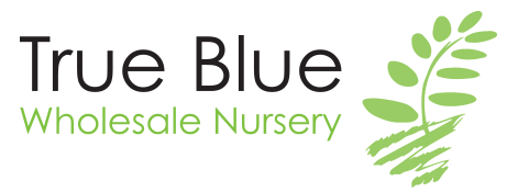 True Blue Wholesale Nursery